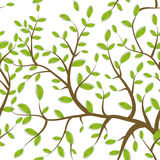 Il modello senza cuciture Brown si ramifica con le foglie verdi, colori pastelli su fondo bianco Vettore Fotografie Stock Libere da Diritti