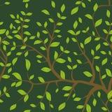 Il modello senza cuciture Brown si ramifica con le foglie verdi, colori pastelli sul fondo di verde del darck Vettore Fotografia Stock