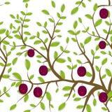 Il modello senza cuciture Brown si ramifica con le foglie verdi, prugna fruttifica museruola divertente di Kawaii con le guance e Fotografia Stock