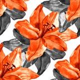 Il modello senza cuciture con i gigli variopinti fiorisce su fondo bianco insieme di fioritura floreale per gli inviti di nozze Fotografia Stock Libera da Diritti