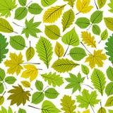 Il modello senza cuciture delle belle foglie, vector il backgr senza fine naturale Fotografie Stock Libere da Diritti