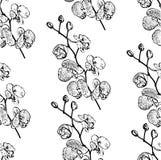 Il modello senza cuciture descrive l'orchidea del ramo Immagine Stock