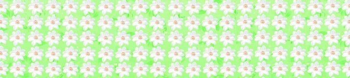 Il modello senza cuciture floreale bianco fiorisce il fondo di struttura Fotografie Stock