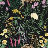 Il modello senza cuciture floreale con la bella fioritura selvaggia fiorisce su fondo nero Contesto con la fioritura del prato illustrazione vettoriale