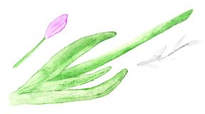 Il modello senza cuciture floreale dell'acquerello con i fiori astratti rosa è Fotografie Stock Libere da Diritti