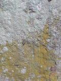 Il modello sulla roccia Immagine Stock