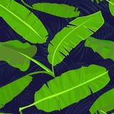 Il modello tropicale disegnato a mano senza cuciture con la banana della palma va, foglia esotica della giungla su fondo scuro Fotografia Stock