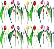 Il modello verticale della bella molla luminosa della lavanda porpora rosa gialla rossa dei tulipani fiorisce l'acquerello royalty illustrazione gratis