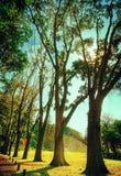 Il modo degli alberi della vita Fotografie Stock Libere da Diritti