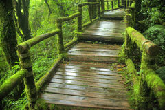 Il modo del percorso camminare in una foresta pluviale tropicale Immagini Stock