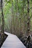 Il modo della passeggiata nella foresta della mangrovia, l'altro nome è inter foresta di marea Immagine Stock