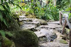Il modo di pietra delle scale nel giardino Fotografia Stock Libera da Diritti