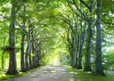 Il modo in foresta Immagini Stock Libere da Diritti
