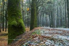 Il modo in foresta Fotografia Stock Libera da Diritti