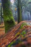Il modo in foresta Immagini Stock