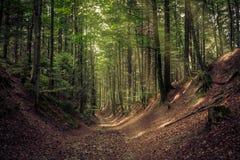 Il modo in foresta Fotografia Stock