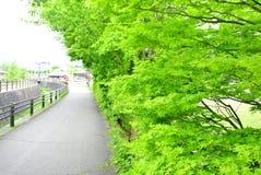 Il modo verde Immagini Stock
