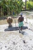Il momento dell'agricoltore che gira il bufalo mentre usando per arare la terra per la nuova preparazione del raccolto Fotografia Stock Libera da Diritti