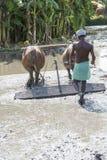 Il momento dell'agricoltore che gira il bufalo mentre usando per arare la terra per la nuova preparazione del raccolto Immagini Stock