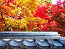 Il momento della stagione colourful Immagini Stock Libere da Diritti