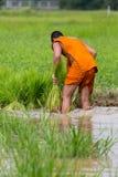 Il monaco locale che lavora nell'azienda agricola del riso Immagini Stock Libere da Diritti