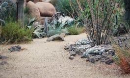 Il mondo del cactus Immagine Stock