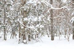 Il mondo di neve Fotografie Stock Libere da Diritti