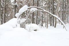Il mondo di neve Fotografia Stock Libera da Diritti