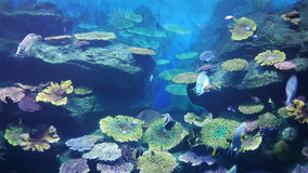 Il mondo di sotto dell'acqua fotografia stock libera da diritti