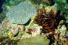 Il mondo sorprendente dei coralli del mare 15 di Andaman fotografia stock