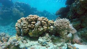 Il mondo sotto acqua Acqua libera stock footage