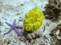 Il mondo subacqueo fotografia stock