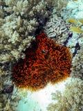 Il mondo subacqueo Immagini Stock Libere da Diritti
