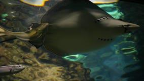 Il mondo subacqueo, bei pesci tropicali variopinti galleggia dopo la macchina fotografica in grande acquario video d archivio
