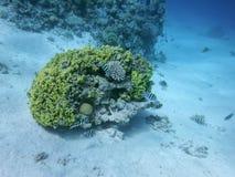 Il mondo subacqueo del mare immagini stock