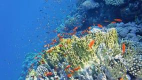 Il mondo subacqueo del mare fotografia stock