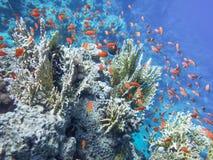 Il mondo subacqueo del mare fotografia stock libera da diritti