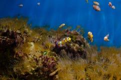 Il mondo subacqueo luminoso Vita sotto le acque tropicali marine Immagine Stock