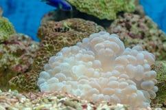 Il mondo subacqueo luminoso Vita sotto le acque tropicali marine immagini stock