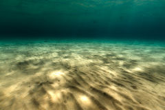 Il mondo subacqueo magnifico del Mar Rosso Immagine Stock Libera da Diritti