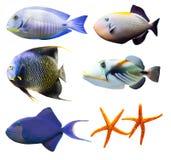 Il mondo tropicale della parte 2 dei pesci ha isolato su bianco Fotografia Stock