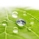 Il mondo in una goccia di acqua Fotografie Stock