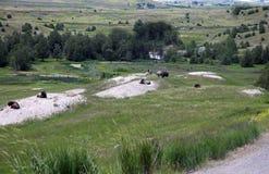 Il Montana in cui il bufalo vaga Immagini Stock