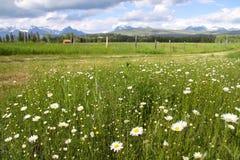 Il Montana scenico Fotografia Stock