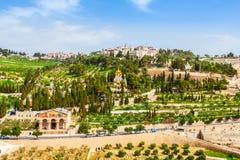 Il monte degli Ulivi ed il vecchio cimitero ebreo a Gerusalemme, Israele Immagine Stock