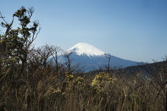 Il monte Fuji Immagine Stock