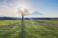 Il monte Fuji con il fascio luminoso attraverso l'albero secco di mattina Fotografie Stock Libere da Diritti