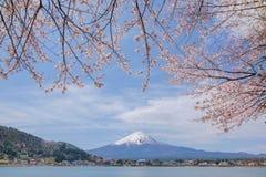 Il monte Fuji dal lago Kawaguchiko con il fiore di ciliegia in Yamanash Fotografie Stock Libere da Diritti