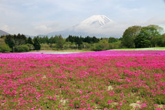 Il monte Fuji, Giappone Fotografie Stock