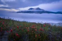Il Monte Sant'Elena in nebbia di mattina Immagine Stock Libera da Diritti